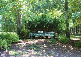 Earlysville Forest 2