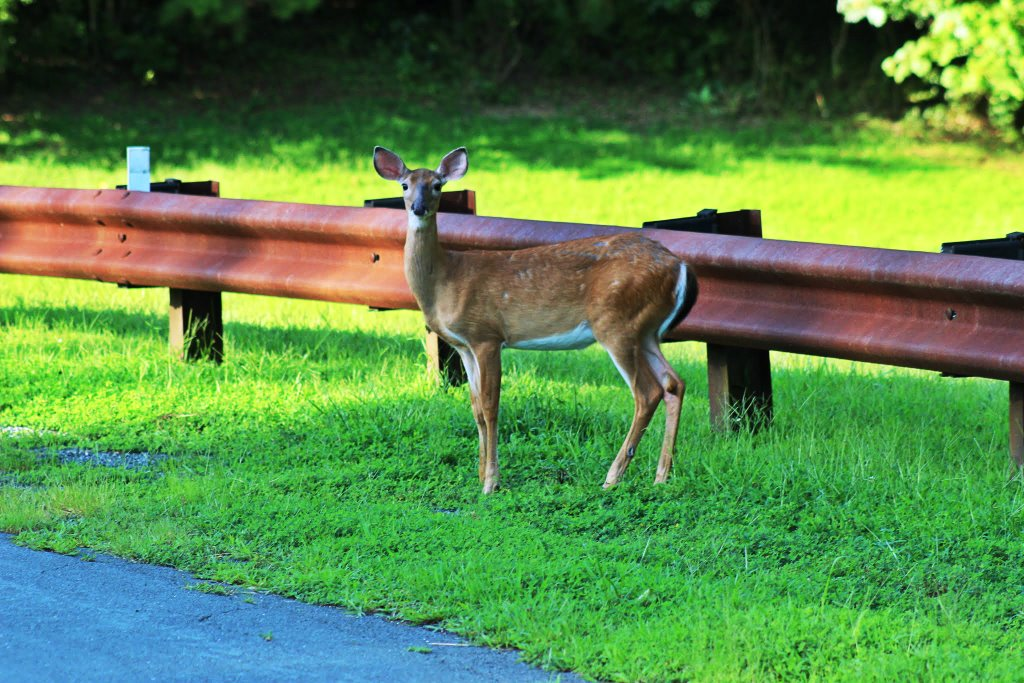 Deer at Colthurst Farm