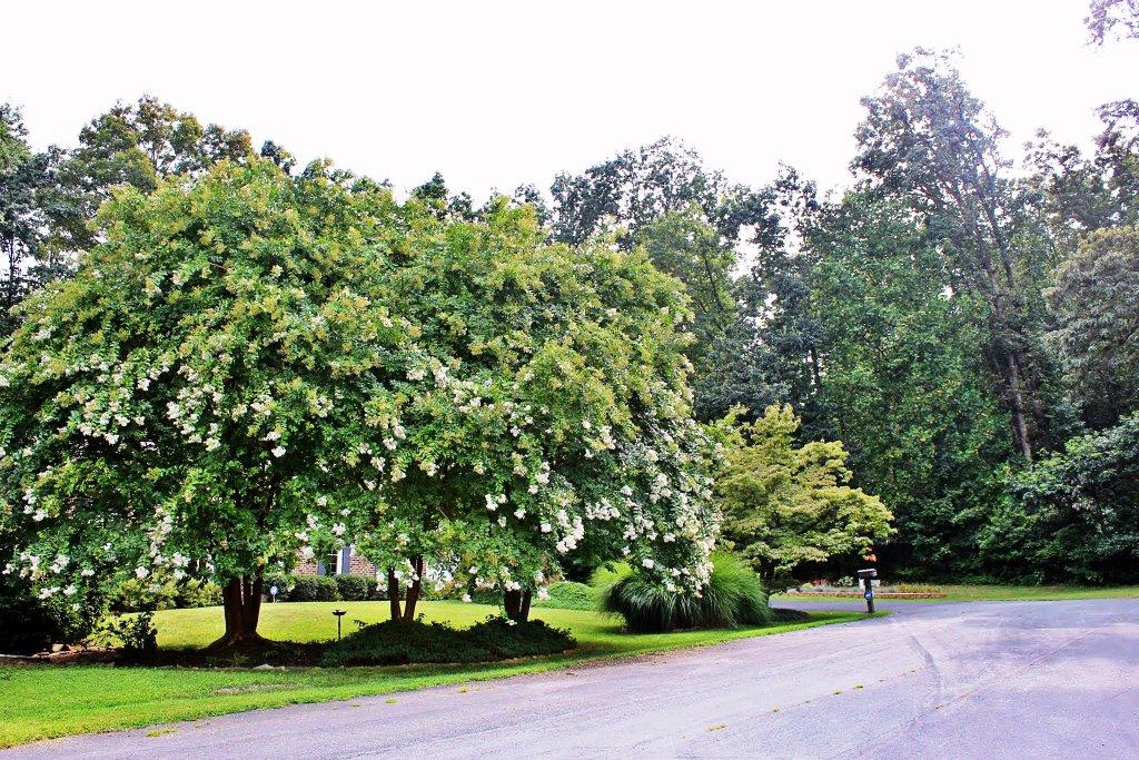 Tree at Canterbury Hills