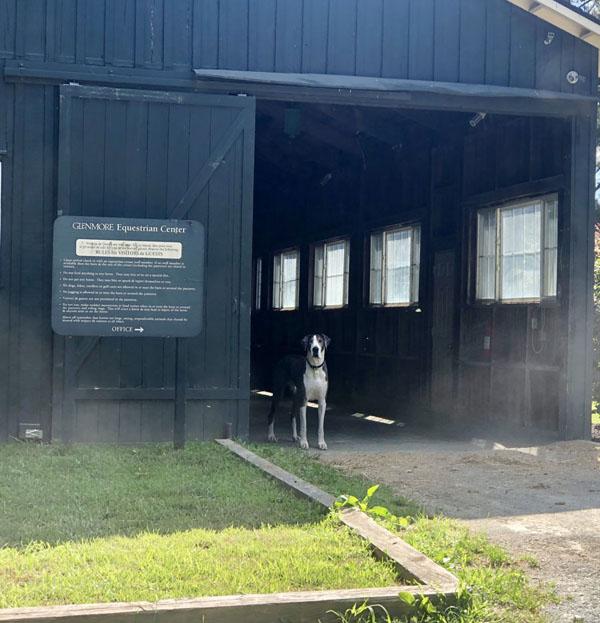 Glenmore-Charlottesville-Horse-Barn